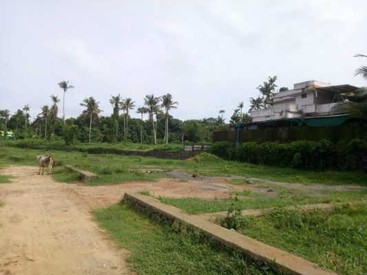 4,5,6,10 cent of land in Trippunithura for sale